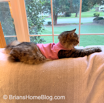 wordless wednesday zoe 07172019