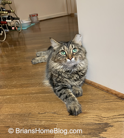 tabby tuesday simon 08062019