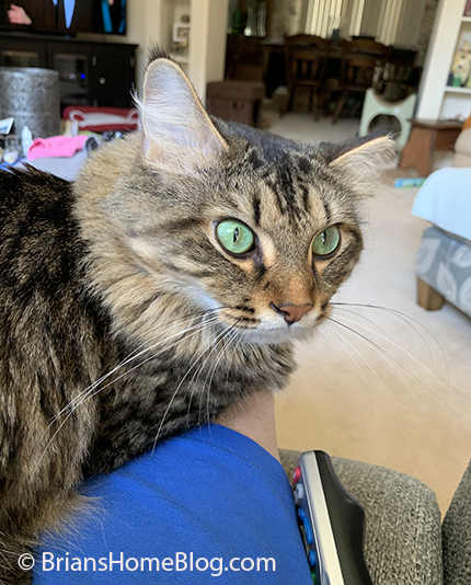 tabby tuesday simon 08272019