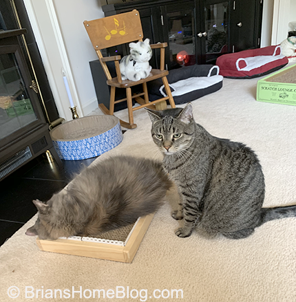wordless wednesday brian dolly 08212019
