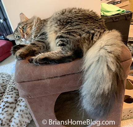 tabby tuesday simon 09102019