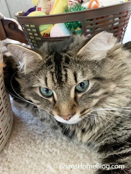 tabby tuesday simon 09172019 01