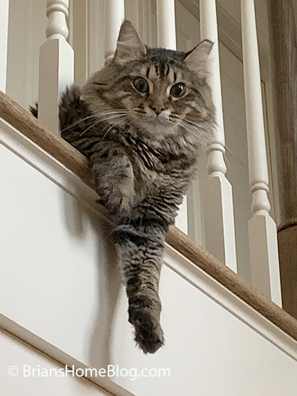 tabby tuesday simon 10012019