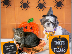 No Tricks, Just Treats for Shelters 2019
