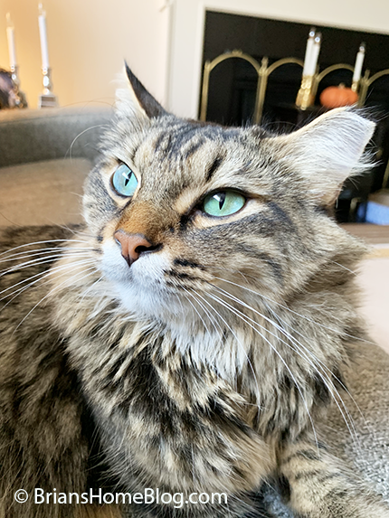 tabby tuesday simon 10082019