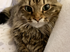 tabby tuesday simon 11262019