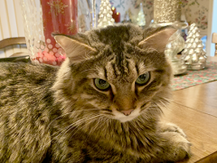 tabby tuesday simon 12172019 2