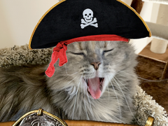 sister saturday dolly caturday pirate 01