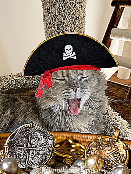 sister saturday dolly caturday pirate 02 09192020