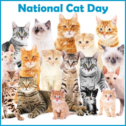 10.29-National-Cat-Day