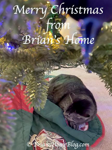feline friday brian 12252020