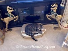 thankful thursday blog hop brian 12172020