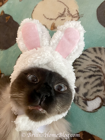 sunday selfie easter bunny seal 04042021