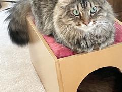 feline friday simon seal 04302021