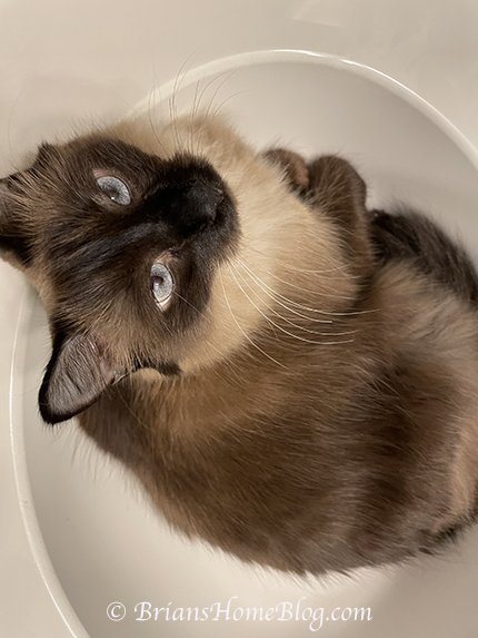 feline friday seal 09242021